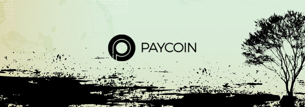 The Death of Paycoin: Employee Video Reveals Internal Chaos