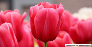 Tramping Through the Tulips with Blodget