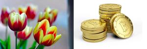 Tulip Mania Vs. Bitcoin
